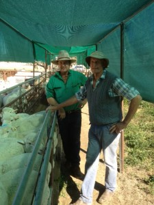 """John Witts, """"Munargo"""" Collerenabri NSW, with Classing James Koster July 2014"""