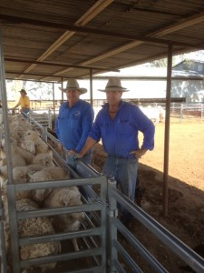 "Mark Evans, ""Martindale"" Walgett NSW, with Classer James Koster"