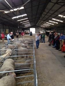 Ballarat Sale 2014