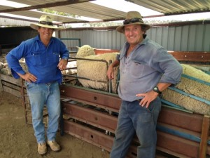 Nov 15 Hogget Ewes Dave Hawker and Rob Barden