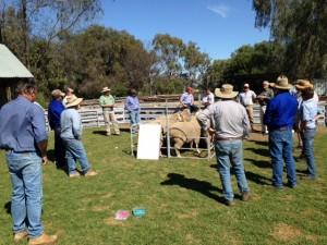 Ram Select day 2015 Macquarie (2)