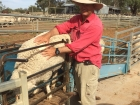 classing-at-dave-julie-hawkers-cunnamulla-qld-1