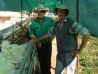 james-and-john-witts-classing-ewes-july-2014